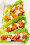 Four Buffalo Chicken Lettuce Wraps drizzled with blue cheese dressing on a white plate