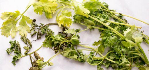 Easy ways to store fresh herbs - www.platingpixels.com